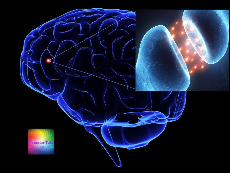 Taurina Regula Sistema Nervioso